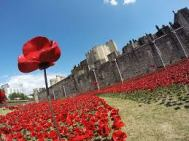 Poppies at the Tower Aug 1914